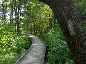 pochuck_boardwalk_woods