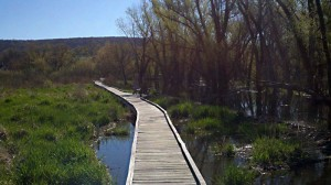 1,600 foot boardwalk through Great Swamp.