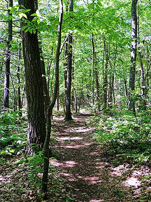 Walking along the Pole Steeple Trail.